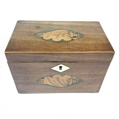 Fine Antique Regency Mahogany Sheraton Shell Inlaid Tea Caddy Two Section