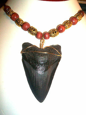 "Big Beast 2 11/16"" Megalodon Shark Tooth Necklace Jewelry*~On Sale Now"