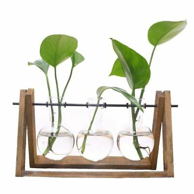 Plant Terrarium with Wooden Stand Glass Vase Holder for Home Decoration B3V6