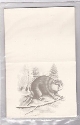 BSA Woodbadge - Beaver Note Cards and Evelope - 8 cards
