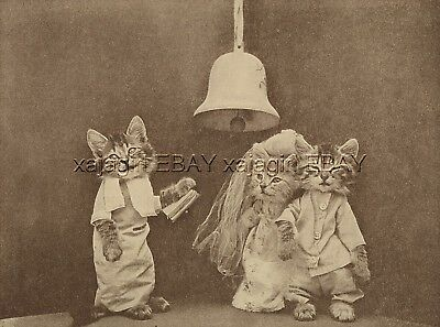 Cat Dressed Kitten Wedding, Priest Preacher Marries Bride Groom, Cute 1915 Print