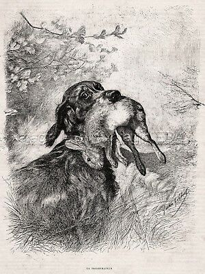 Dog Gordon Setter Retrieving Rabbit Hare During Hunt, Large 1880s Antique Print
