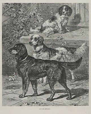 Dog Gordon Setter, English Setter Springer Spaniel 1880s Antique Engraving Print