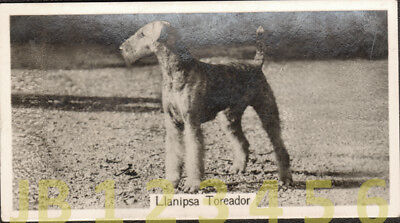 DOG Airedale Terrier (Named Champion), Small Photo Trading Card 1938