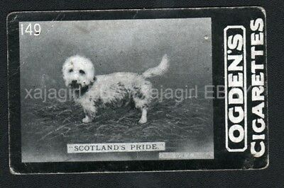 DOG Dandie Dinmont Champ Photo Trading Card 100 Yrs Old