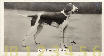 DOG English Pointer Named Champion, Small Photo Trading Card 1938