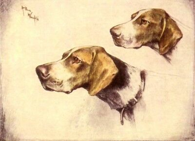 DOG English Pointer Pair, Pretty Trading Card, 1940