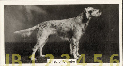 DOG English Setter (Named Champion), Small Photo Trading Card 1938