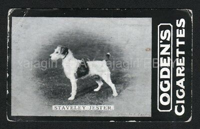 DOG Fox Terrier (Named), 1902 Photo Trading Card 1