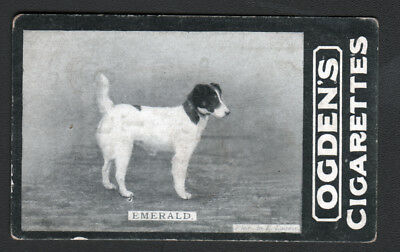 DOG Fox Terrier (Named), 1902 Photo Trading Card 2