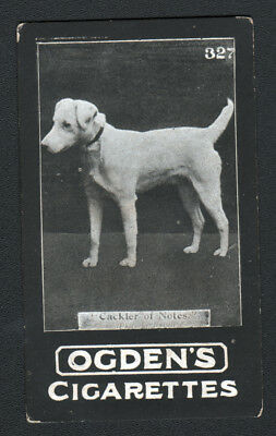 DOG Fox Terrier (Named), 1902 Photo Trading Card 5