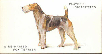 DOG Fox Terrier (Wire-Haired), Breed Trading Card, 1931