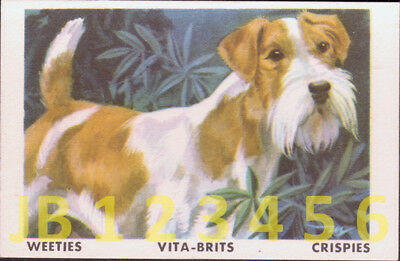 DOG Fox Terrier Wire Haired, Vintage Australian Trading Card 1962