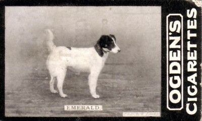 DOG Fox Terrier, Photo Trading Card, 100 Years Old