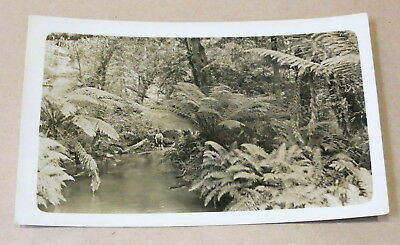 Antique Used Postcard 1914 Australian Fern Gully Real Photo