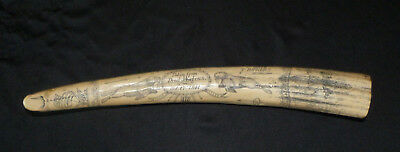 Scrimshaw Walrus Tusk (Resin Not Real Ivory)