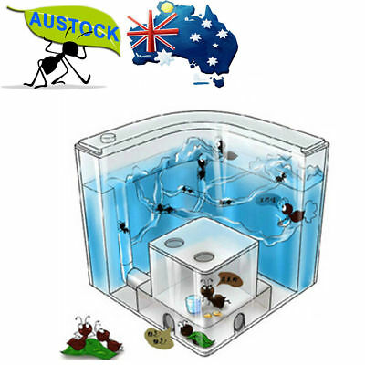 19.5cm Ant Home Castle Maze Farm Natural Educational Insects Live World Kid Toys