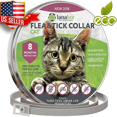 Cat Collar Pet Essential Oil Pest Control Collars by Prevention for Kitten