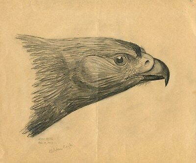 Drawing By Heinz Meng  ~  A Golden Eagle