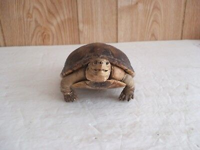 Very Old Real Taxidermy Turtle - L@@K -