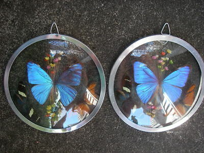 Vintage Real Butterfly Wing Collection Framed Wall Art Pictures with Morpho Blue