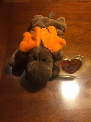 'Chocolate' the Moose - Ty Beanie Baby - MINT - RETIRED Great Condition