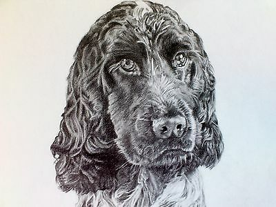 Pet portraits , hand drawn portrait. made to order from photographs
