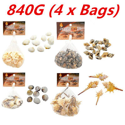840G WHITE n COLOR SHELLS For Craft Project Wedding Home Aquarium Decoration WMC