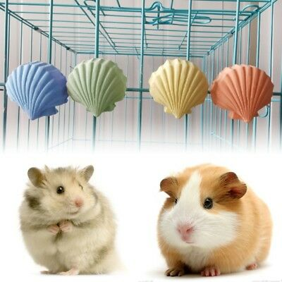 Parrot Hamster Teeth Grinding Toys Birds Squirrel Calcium Stone Shell Shape Chew