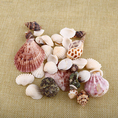 2C6E New 100g Beach Mixed SeaShells Mix Sea Craft SeaShells Aquarium Decor