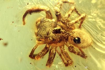 Dominican Amber, Insect Inclusion, Araneae: Araneida (Spider) with ant