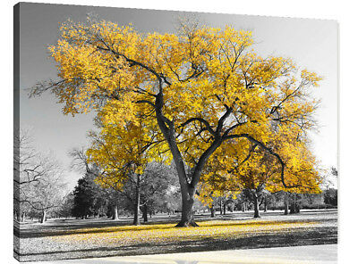 Large Yellow Leaves Black White Tree Nature Canvas Wall Art Picture Print