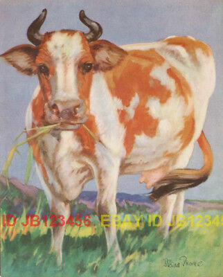 COW Lovely Red & White Heffer, Large Vintage 70-yr-old CHILDREN's Print