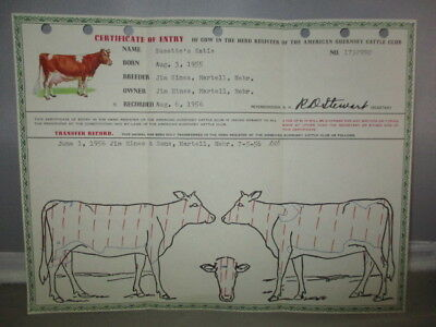 Certificate Of Entry Of Cow-Herd Registry-American Guernsey Club-Susette,s Katie