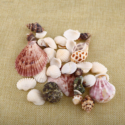 6D6E New 100g Beach Mixed SeaShells Mix Sea Craft SeaShells Aquarium Decor