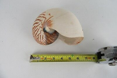 """Nautilus 6"""" Large Shell From Pacific North West"""