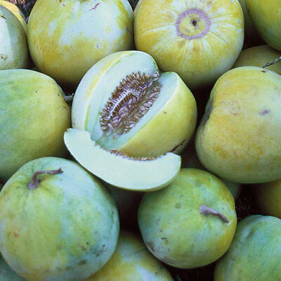 Sakata's Sweet Melon 15 seeds Sweet Fruits can be grown on Trellis Easy Rare