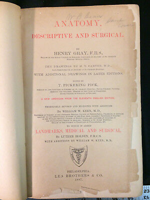 1870 Grays Anatomy Anatomy Descriptive And Surgical By Henry
