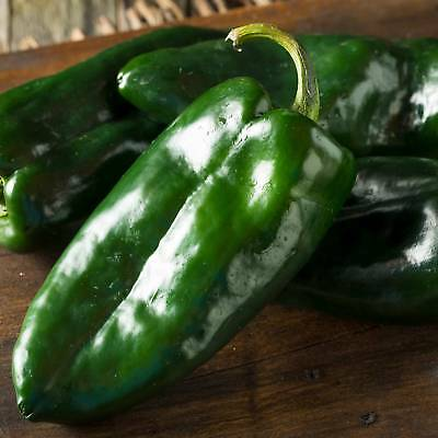 Ancho Grande Hot Pepper Garden Seedss - Non-Gmo, Heirloom Vegetable Chili Seeds