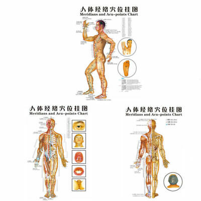 1PCS Chinese Medicine Body Acupuncture Points Meridians And Acupoints Map Chart