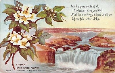 B8739 Idaho State Flower Poem Shoshone Falls - Antique PC Williamson-Haffner Co.