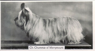 DOG Skye Terrier (Named), Small Photo Trading Card 1938