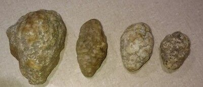 Lot Of 4 Unique Southern Indiana Crinoid Calyx Fossils
