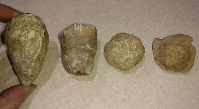 Lot Of 4 Different Southern Indiana Fossils- Crinoids Brachiopods