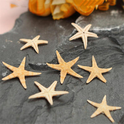 100Pcs Cute Small Mini Starfish Lot Sea Star Shell Beach Decor Craft DIY Making