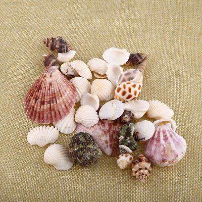 825C New 100g Beach Mixed SeaShells Mix Sea Craft SeaShells Aquarium Decor