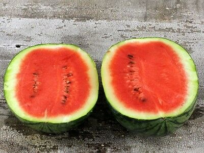 Thai Rom Dao Watermelon 50 Seeds Garden Vegetable