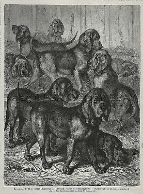 Dog Bloodhounds at Zoo in Paris, St. Hubert Hounds, Large 1870s Antique Print