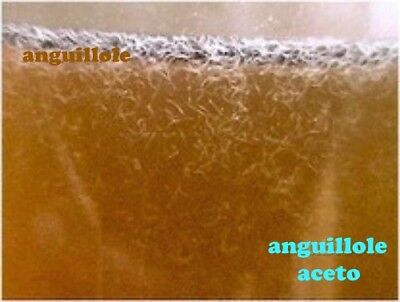 Live Vinegar Eel Starter Culture Microscopic Live food for fry or Spawning