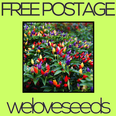 LOCAL AUSSIE STOCK - Bolivian Rainbow, Chilli Pepper Seeds ~10x FREE SHIPPING
